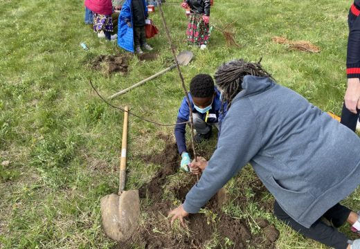 2021 Plant Your Dreams at Big Apple Orchard (Mt. Vernon, IA). Nancy Humbles (President, CRCSD Board of Education) assisting during the planting.